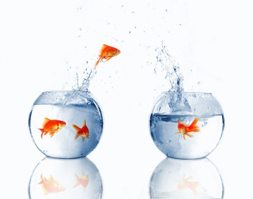 Email migration should not be a fish-out-of-water experience